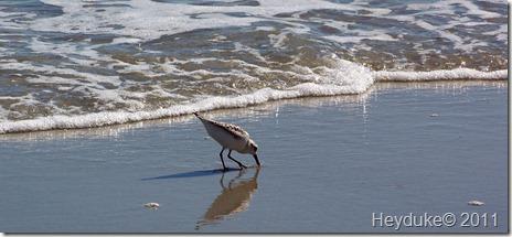 2011-10-17 Myrtle Beach 026