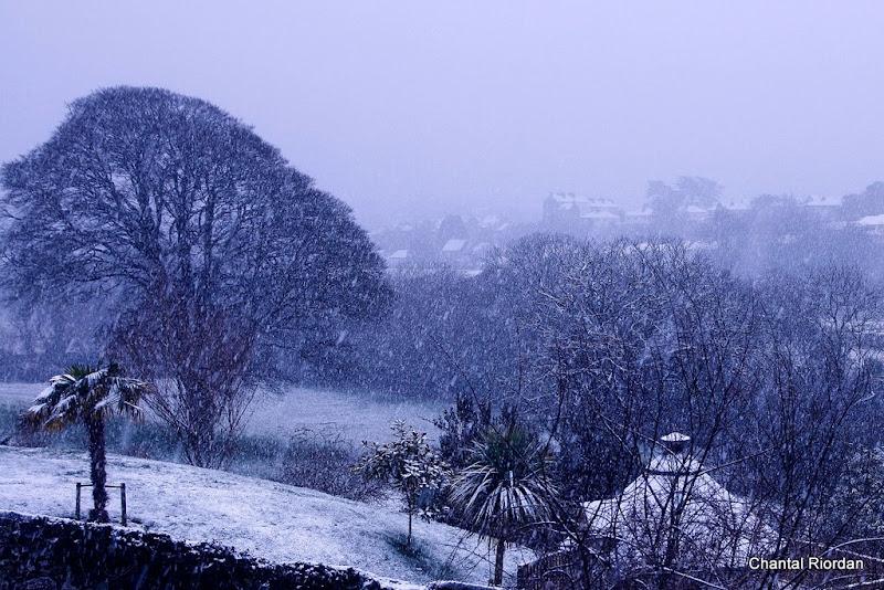 Early morning snow-Chantal Riordan.jpg