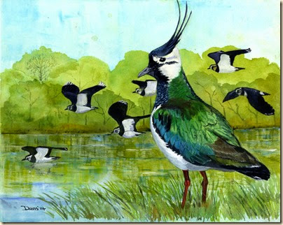 Lapwings430