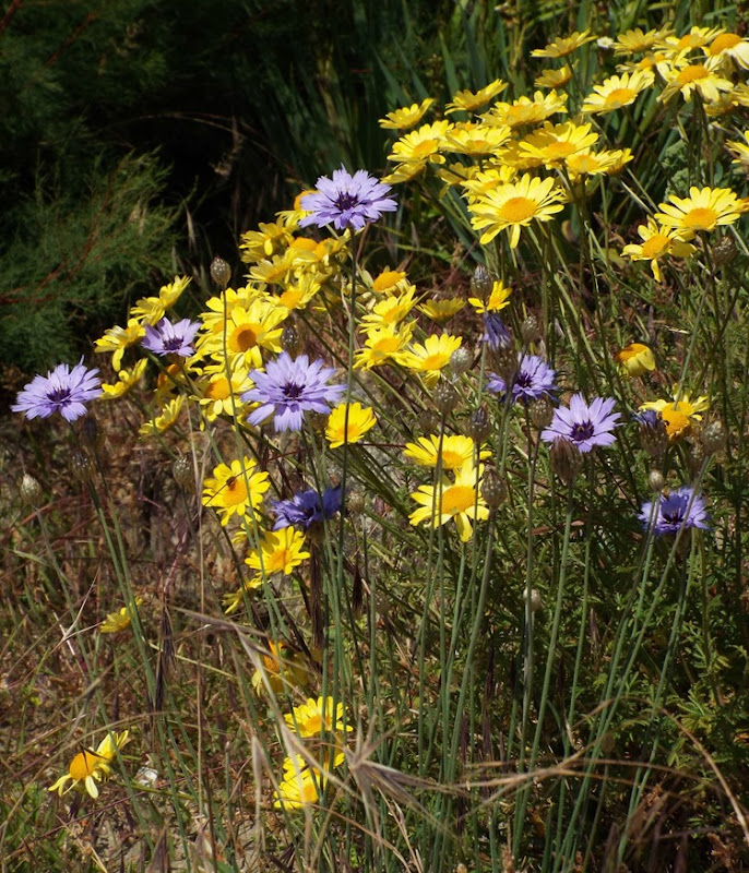 yellow and purple wild flowers