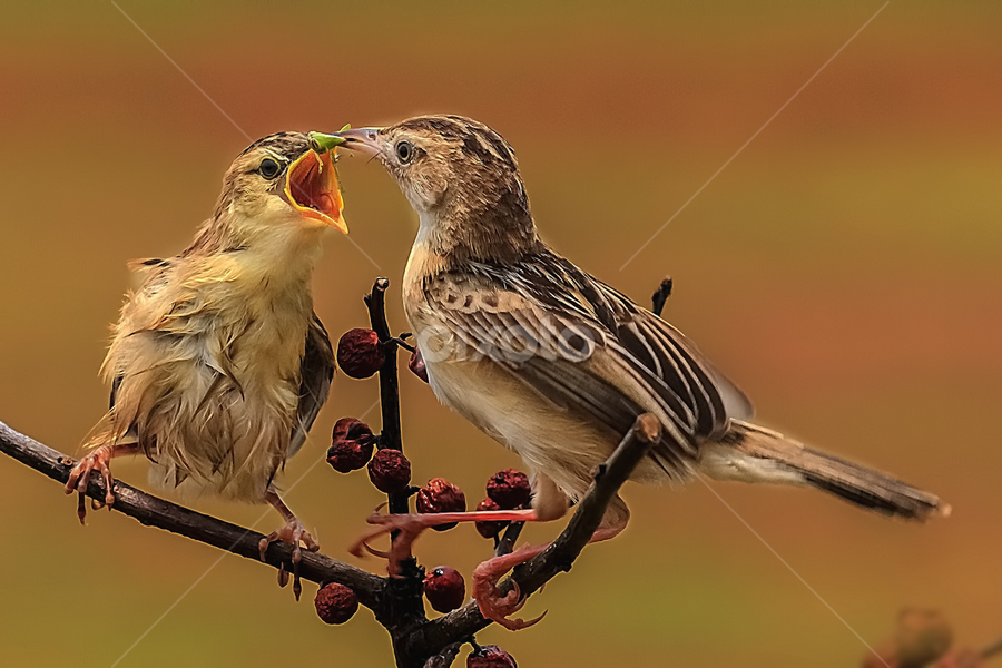 Morning Breakfast by Husada Loy - Animals Birds