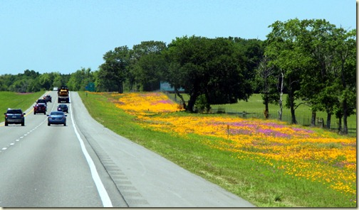 Brilliant flowers all along I-10 near Talahassee, Florida
