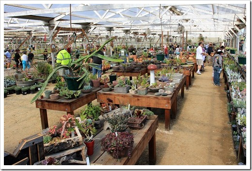 120928_SucculentGardens_greenhouse