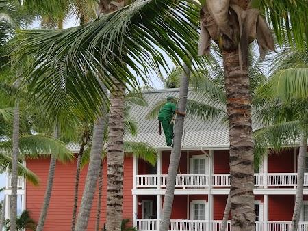 Vacanta Republica Dominicana: Baietii in verde de la hotel, buni la toate