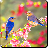 spring live wallpapers APK for iPhone