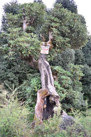 In copac