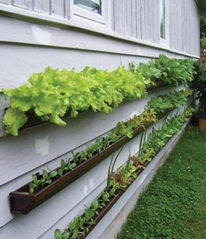 guttering garden