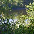 Loire rive droite aux Rompeys, à Marclopt photo #1196