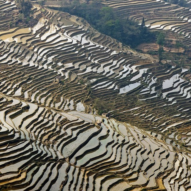 Honghe Hani Rice Terraces Now a UNESCO World Heritage Site