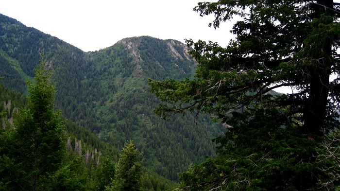 mountains in Millcreek Canyon