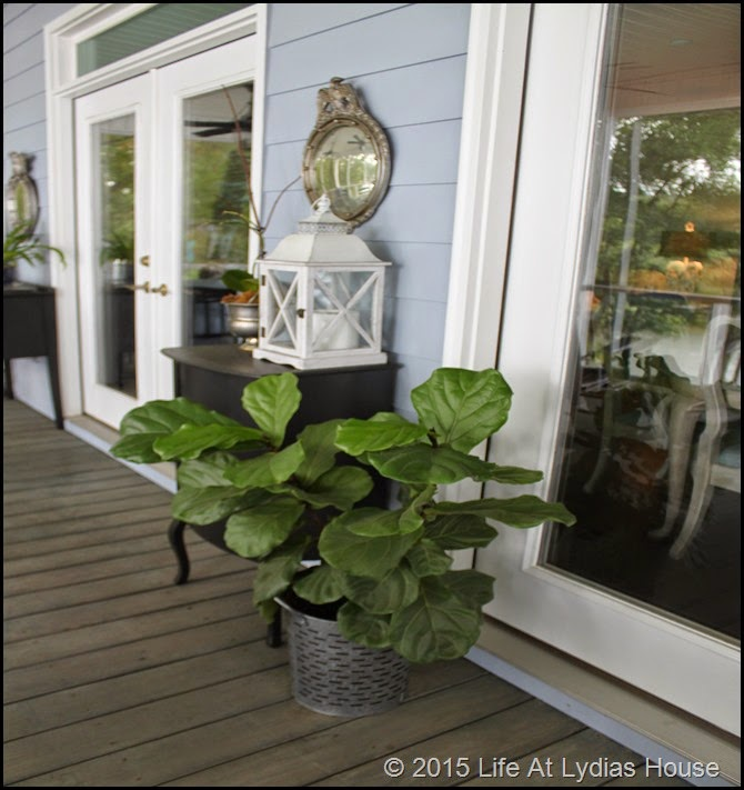fig tree on porch in summer b