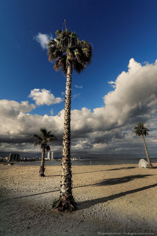 palm tree barcolenta spain