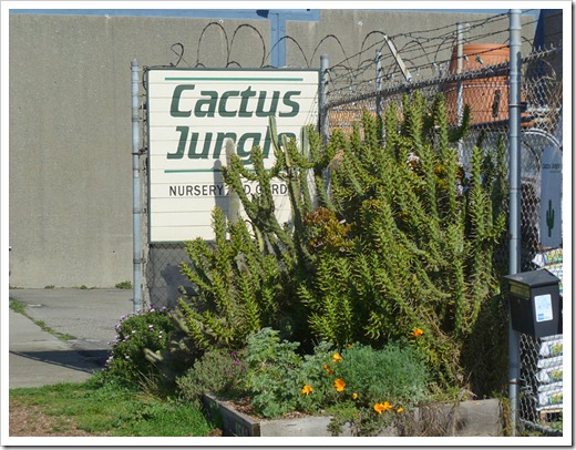 120208_CactusJungle_53