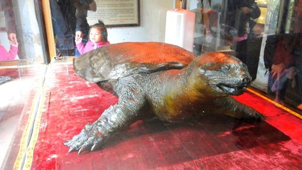 Tartaruga no Templo Ngoc Son