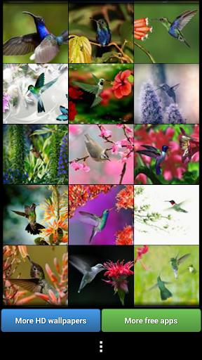 玩免費生活APP|下載五顏六色的蜂鳥 app不用錢|硬是要APP
