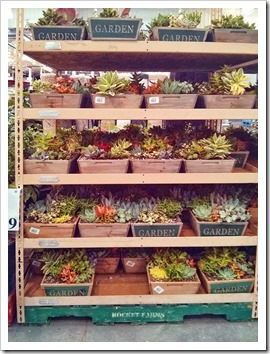130612_SucculentGarden_Costco_01