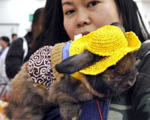 rabbit-fashion-Seoul-2010