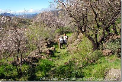 7444 La Goleta-La Candelilla(Camino entre Almendros)