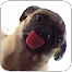 Dog Licker .. file APK for Gaming PC/PS3/PS4 Smart TV