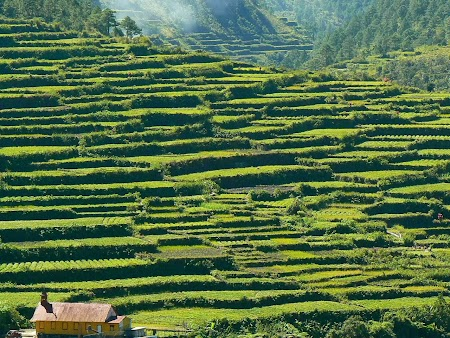 Pledoarie pentru Filipine: Terase de orez