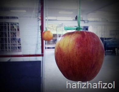 buah epal tergantung