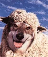 lobo_ovelha