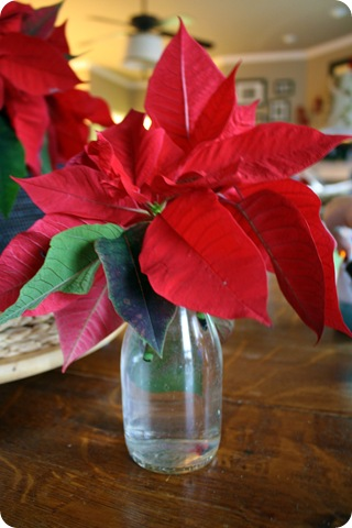 searing poinsettia stems