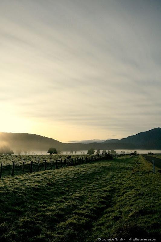 Tree field mist dawn