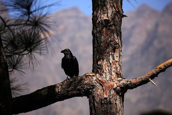 Taller de fotografia y senderismo junto a la Cumbrecita, en la caldera de Taburiente, Parque Nacional. Fotonature 2012. Isla de la Palma