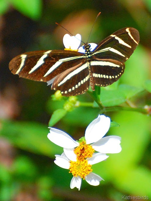 1. butterfly-kab