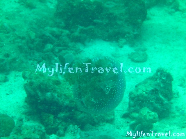 Koh Lipe Diving 23