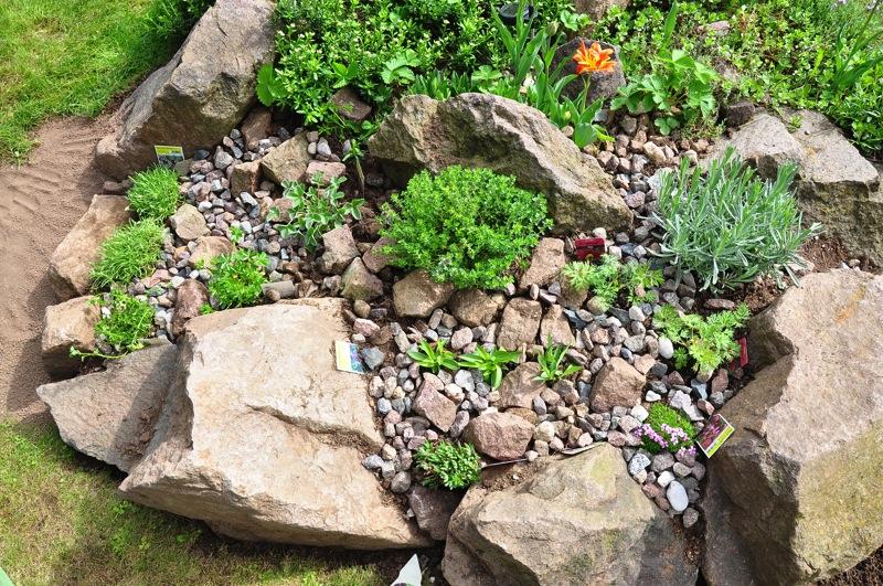 Squarciomomo cambiamenti nel giardino roccioso - Costruire giardino roccioso ...