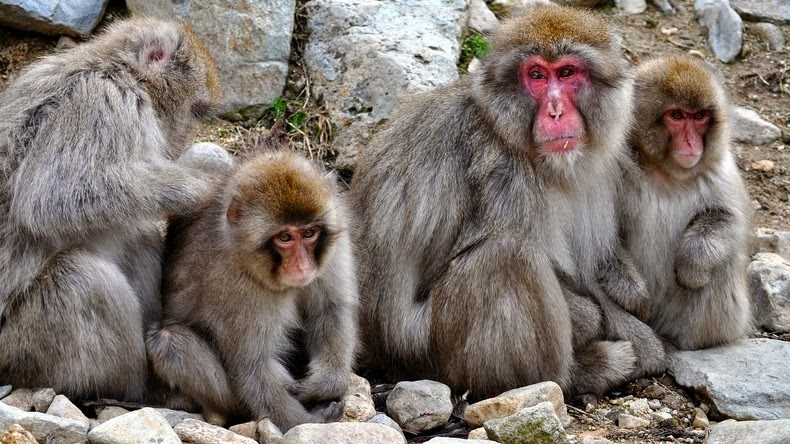 snow-monkeys-jigokudani-5