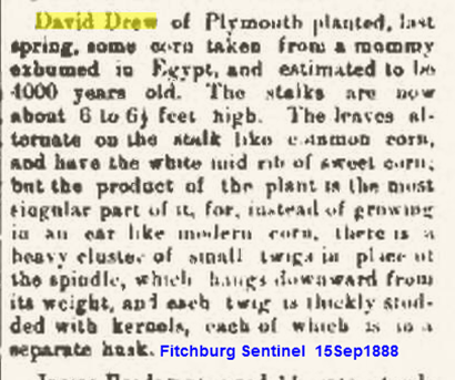Drew David plants ancient corn 1888