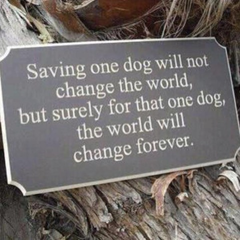 saving one dog