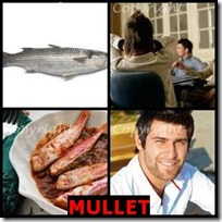 MULLET- 4 Pics 1 Word Answers 3 Letters