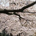 2005-04-06 001.jpg
