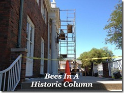 Bees In Column