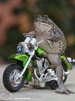 frog on a motorcycle.jpg