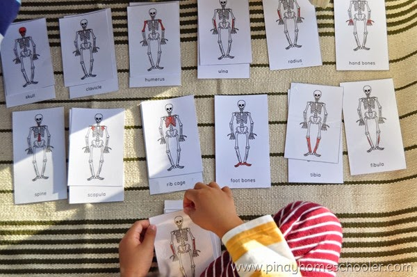 Skeletal System Nomenclature and Definition Cards