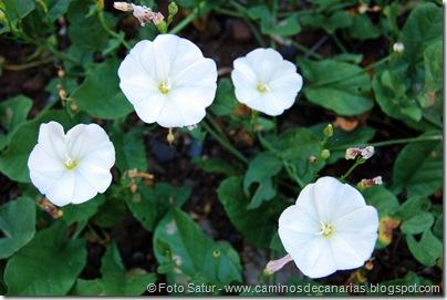 6404 Santa Brígida-Hoya Chiquita(Corregüela blanca)