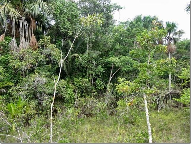 BR-319_Humaita_Manaus_Day_3_DSC05649