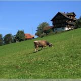 natürlich gibt es hier auch Kühe