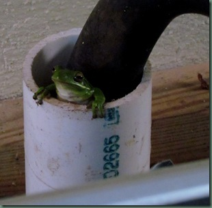 green tree frog by washing machine