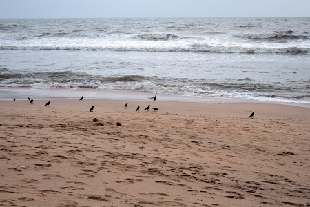 La Mare in India: Anjuna beach Goa