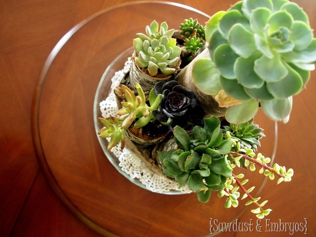 Succulent Centerpiece using Birch Logs and Twine (Sawdust and Embryos)