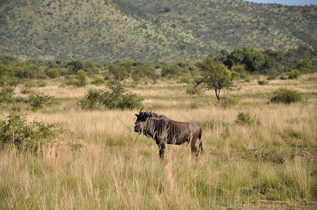 9. Safari Africa de Sud.JPG