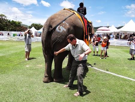28. Tony, ortoped elefanti.JPG