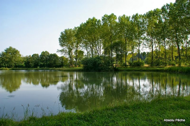 LITTLE FISH LAND photo #1478