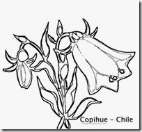 copihue. chile 3 colorear 1 1 1 1